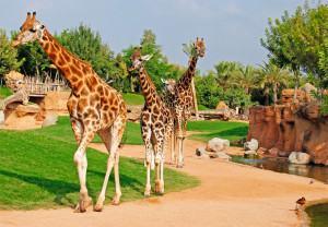 Motorhome Trip to Best Zoos